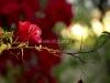 Blooming Spirit
