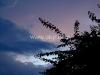 Twilight Thorns