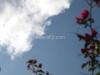 Thorns, Sky, and Plane