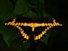 Tiger Stripes in the Dark