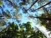 Arbor Variety, Cloudless Sky