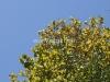Towering Tree of Shades of Green